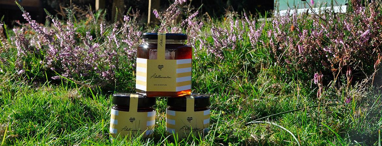 ¿Te gustan las abejas y quieres proteger su futuro?